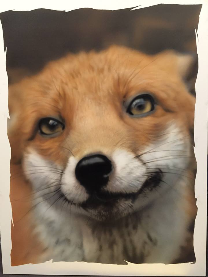 Pudding the Fox, Show
