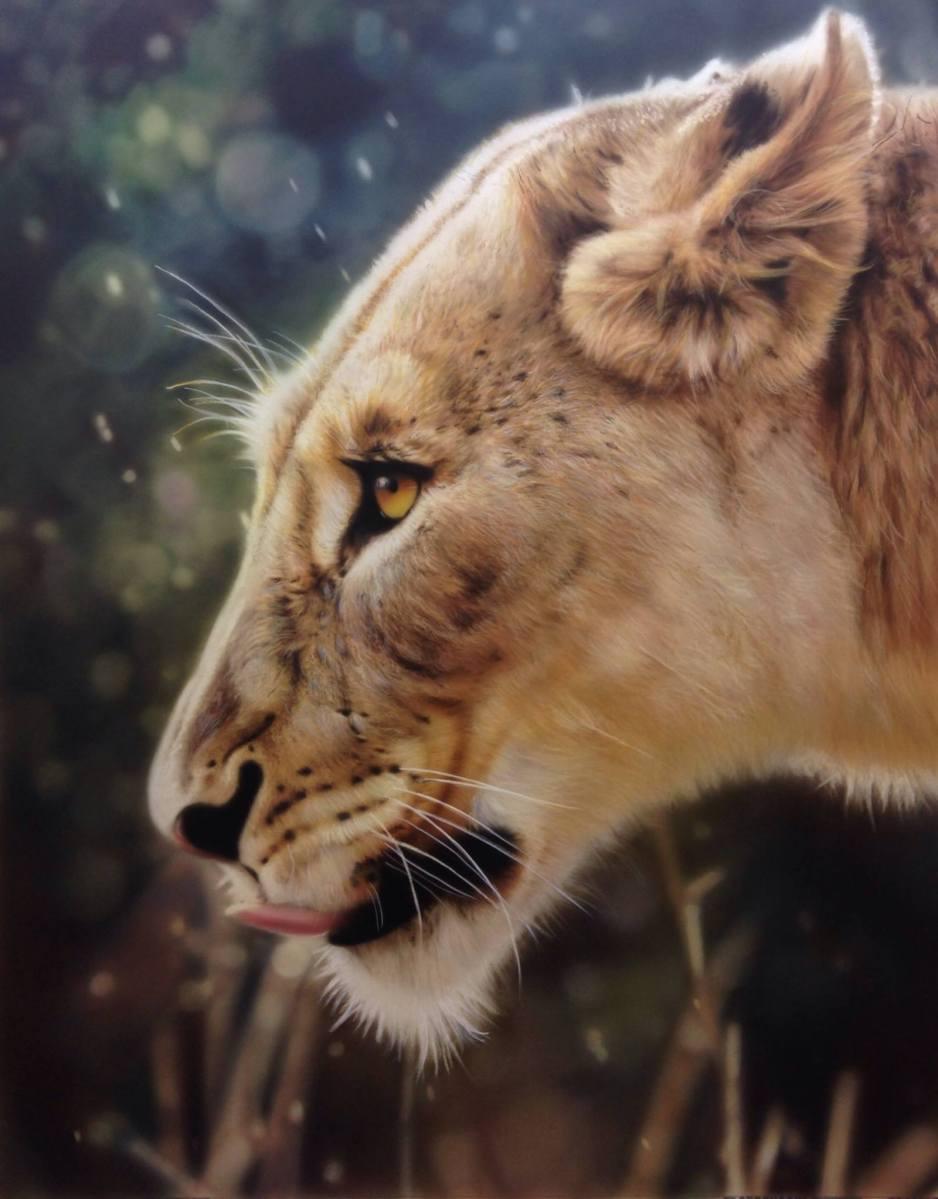 Lioness UK