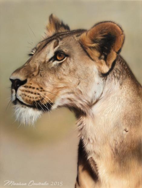lioness limburg